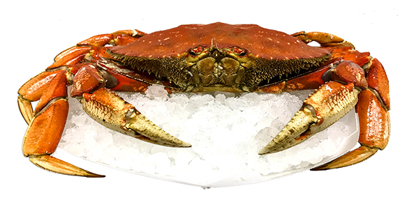 click here to read more about Dungeness Crab
